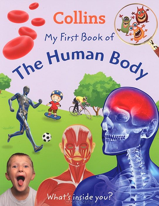 My First Book of the Human Body: What's Inside You?